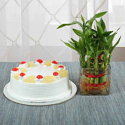 Pineapple Cake With Lucky Bamboo Plant: Pineapple Cakes Delivery