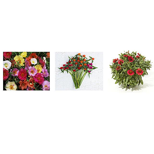 Portulaca Gomphrena & Gaillardia Seeds Combo: Flowering Plant-seeds