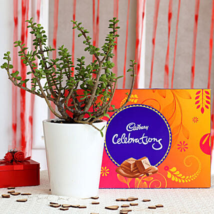 Potted Jade Plant & Cadbury Celebrations Combo: Cadbury Chocolates