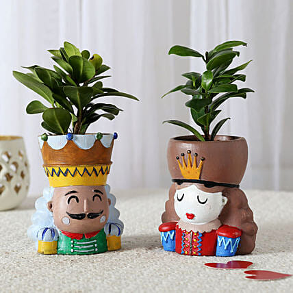 Set of 2 Ficus Compacta In King Queen Pots: