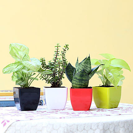 Foliage & Air Purifying Plant Set: Buy Indoor Plants
