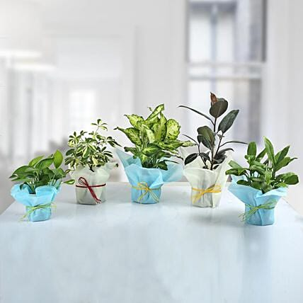 Set of 5 Refreshing Green Plants: Best Outdoor Plant