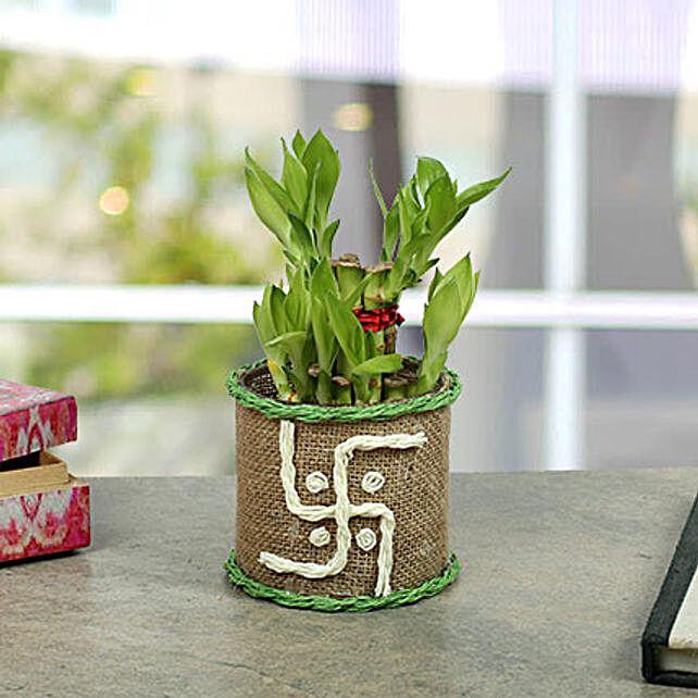Swastika Two Layer Bamboo plant: Navratri Gifts