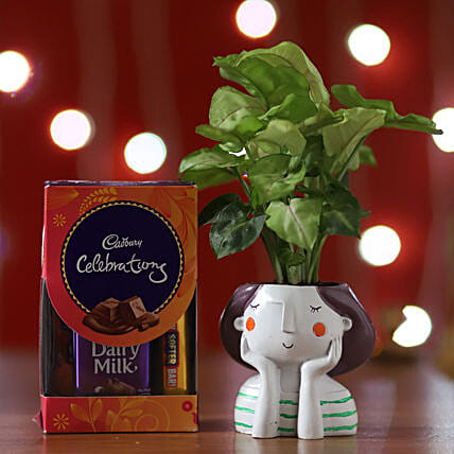 Syngonium Plant & Cadbury Celebrations: Chocolate Combos