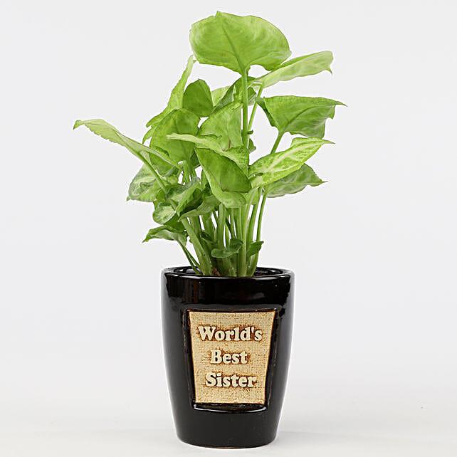 Syngonium Plant In World's Best Sister 3D Pot: Money Plant