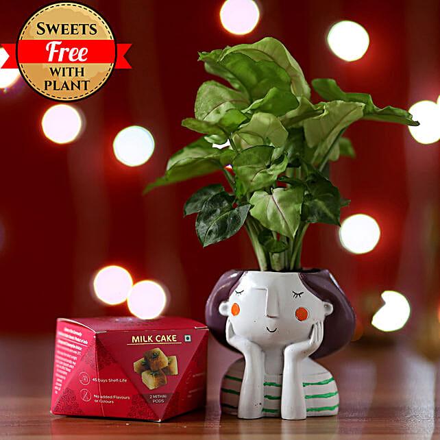 Syngonium Plant & Milk Cake Combo: Good Luck Plants