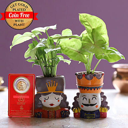 Syngonium Plant Set & Free Gold Plated Coin: Indoor Plants