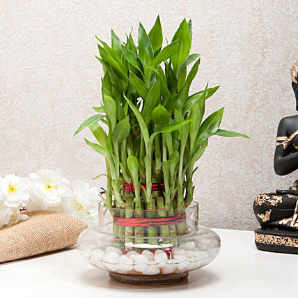 Three Layer Bamboo Good Luck Terrarium: Terrariums Plants