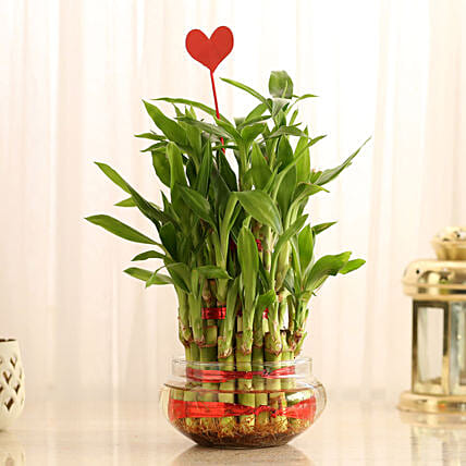 Three Layer Lucky Bamboo With Heart Shaped Tag: Send Plants for Anniversary
