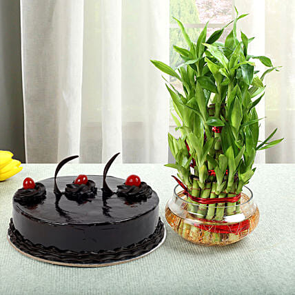 Truffle Cake N Three Layer Bamboo Plant: Good Luck Plants