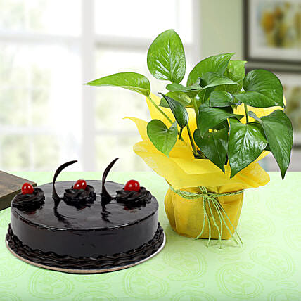Truffle Cake With Money Plant: Potted Plants