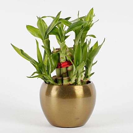 Two Layer Bamboo Plant in Copper Orchid Metal Pot: Valentines Day Lucky Bamboo