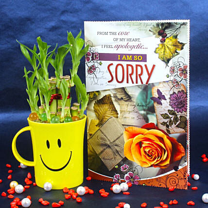 Two Layer Bamboo Plant & Sorry Card: Buy Indoor Plants