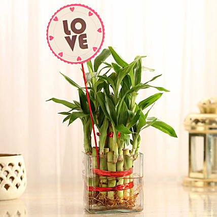 Two Layer Bamboo in Vase with Love Tag: Buy Indoor Plants