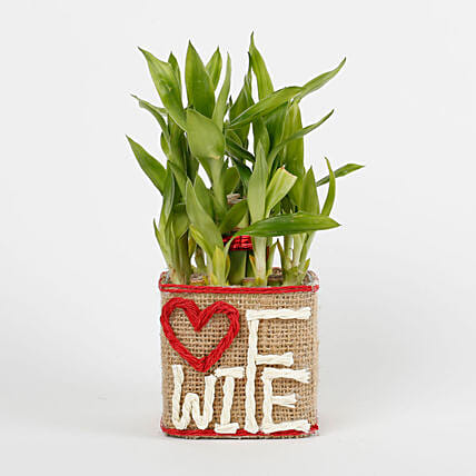 Two Layer Lucky Bamboo For Wife: Buy Indoor Plants