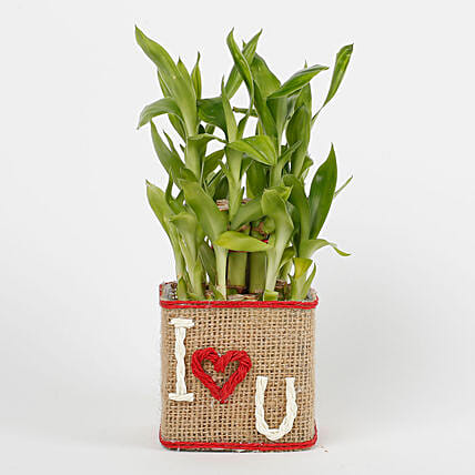 Two Layer Lucky Bamboo in a Glass Vase I Love You: Gifts for Hug Day