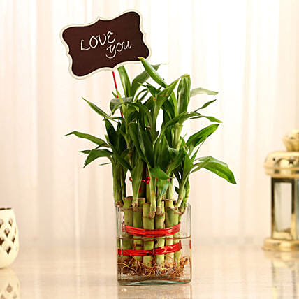 Two Layer Lucky Bamboo With Love You Tag: Plants for anniversary