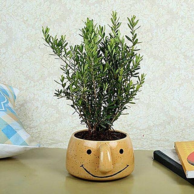 Unimus Plant In Smiley Vase: