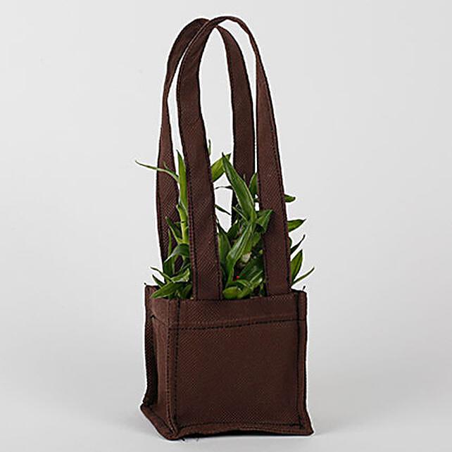 Two Layered Bamboo in Coffee Brown Bag: Spiritual and Vastu Plants