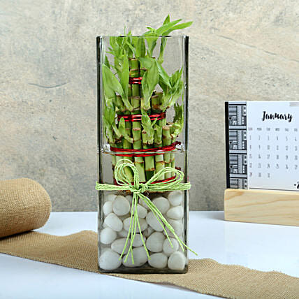 Exquisite Three Layer Bamboo Terrarium: Terrariums Plants