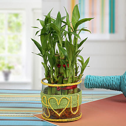 Love For Lucky Bamboo: Wedding Anniversary Gifts for Wife