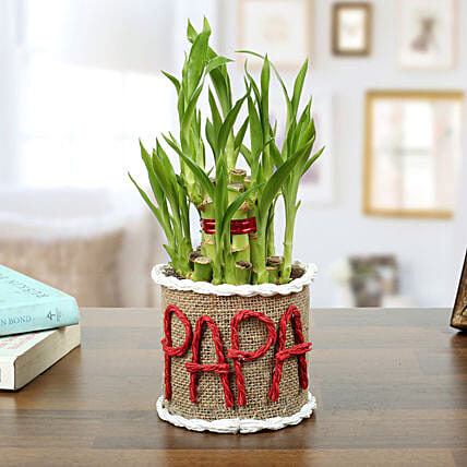 Lucky Bamboo Plant For Papa: Exotic Plants