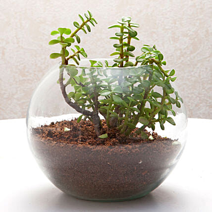 Fantastic Jade Terrarium: Birthday Gifts for Girls