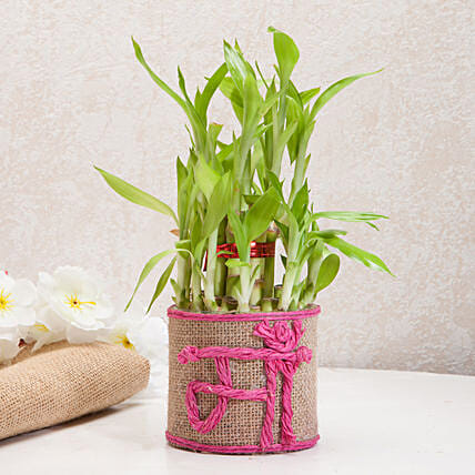 Sincerely Yours Mom Lucky Bamboo Plant: Birthday Gifts for Mother