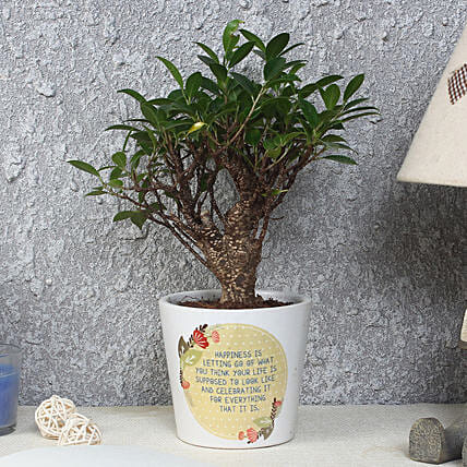 Ficus Bonsai Plant in Printed Pot: Bonsai Plants