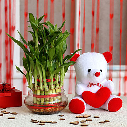 Three Layer Lucky Bamboo with Teddy Bear: Gift Combos