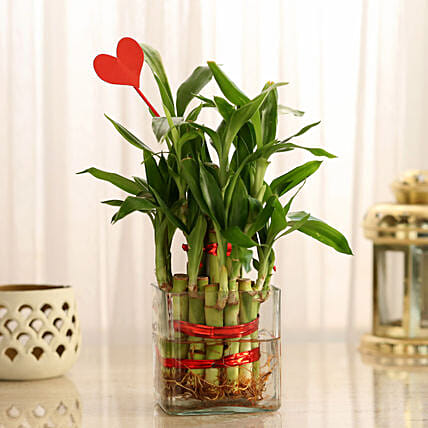 Two Layer Lucky Bamboo With Heart Shaped Tag: Send Gifts for Fiancee