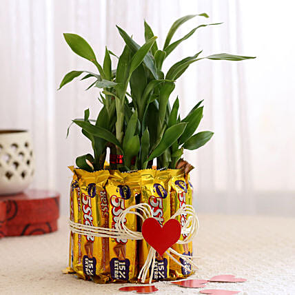 Lucky Bamboo with Five Star Chocolates Combo: Send Plants n Chocolates