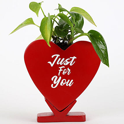 Money Plant In Just For You Ceramic Pot: Plants Offers