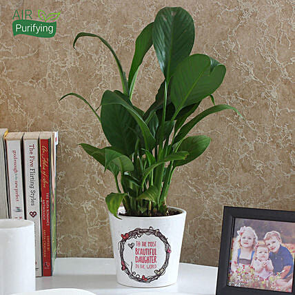 Enchanting Peace Lily Plant: Air Purifying Plants