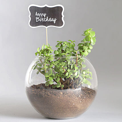 Happy Birthday Jade Plant Terrarium: Same Day Gifts Delivery