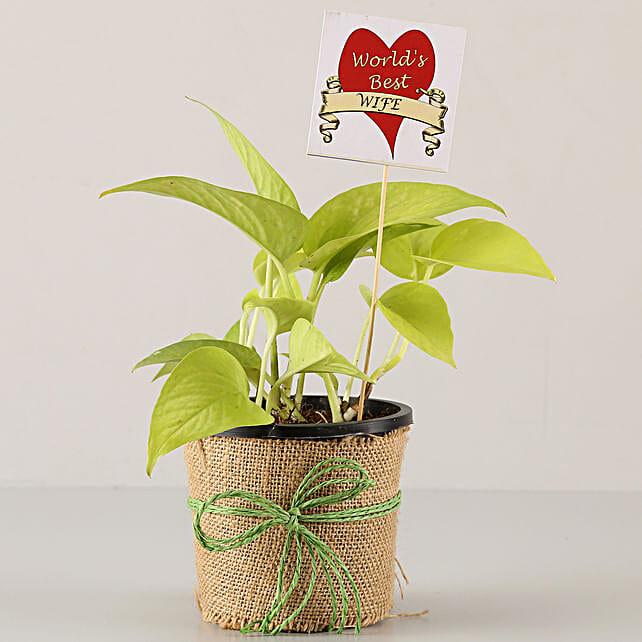 Golden Money Plant For Best Wife: