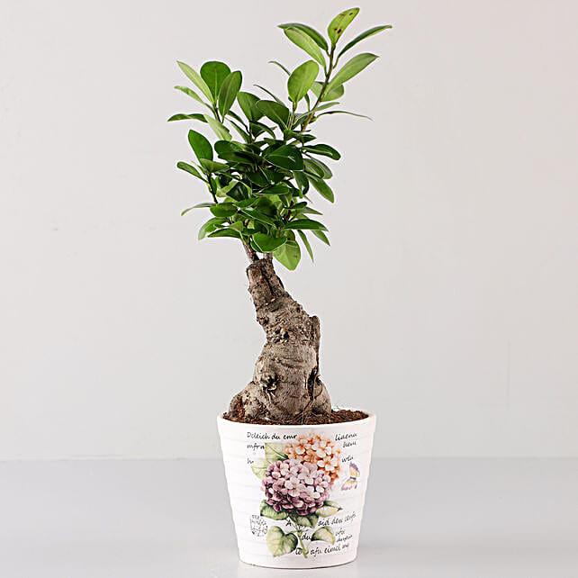 Ficus Bonsai In Lavender Découpage Planter: Rare Plants