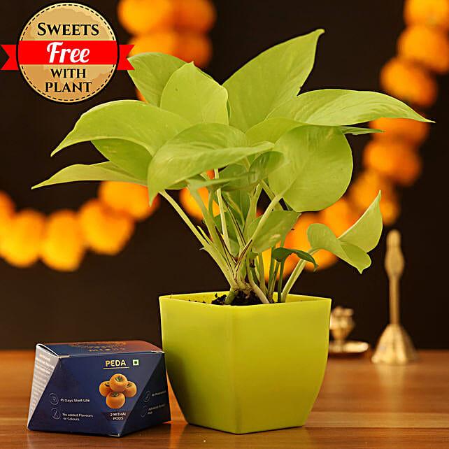 Golden Money Plant & Peda Sweet: Deepavali Gifts