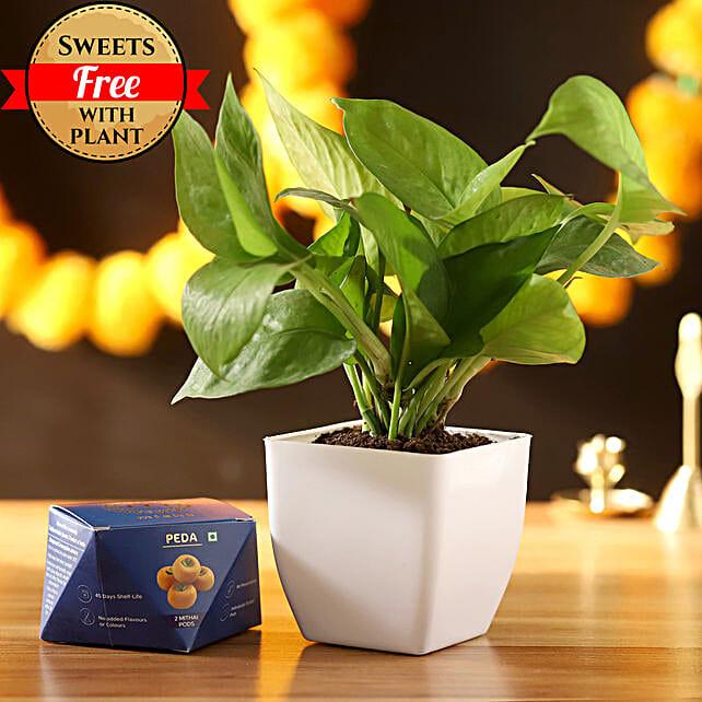 Money Plant With Sweet Peda: Diwali Sweets Jalandhar