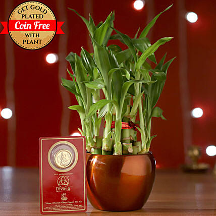 Free Gold Plated Coin With 2 Layer Bamboo Plant: Gift Combos