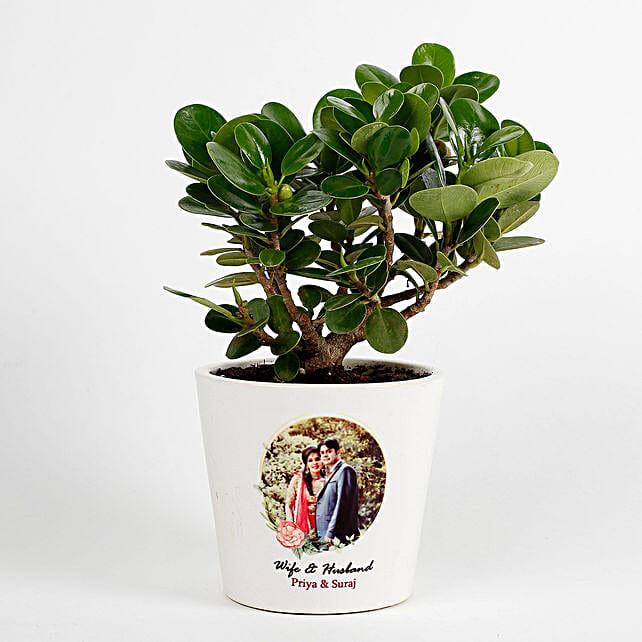 Ficus Dwarf Plant in White Personalised Ceramic Pot: