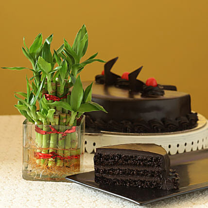 Truffle Cake N Two Layer Bamboo Plant: Lucky Bamboo for Friendship Day