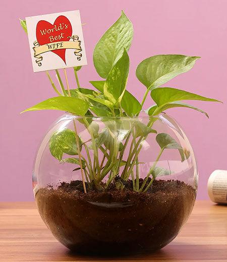 plants for karwa chauth