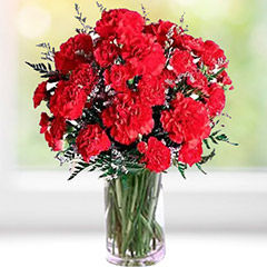Send Carnations to Canada Online