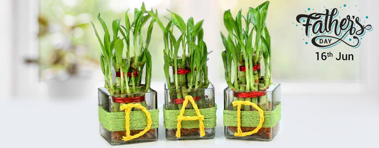 Plants for Father's Day