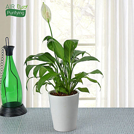 House Plant Online Canada Html on
